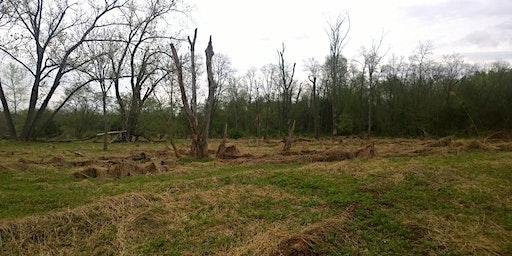 Tree Planting in Neshaminy State Park, PA-100 native trees spring/fall 2020