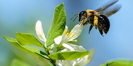 Pollinators Landscaping/Herbs