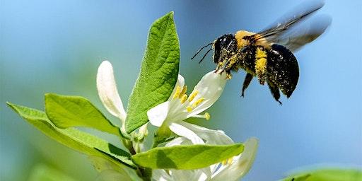 Pollinators landscaping/Herbs Master Gardeners only
