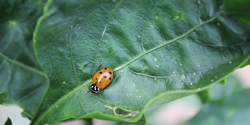 Integrated Pest Management Master Gardeners Only