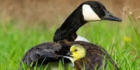 Parent-Child Mother Goose @ Burnie Library tickets