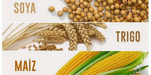 Charla Gratis: Alimentos Agresores