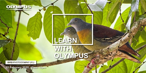 LEARN WITH OLYMPUS - BIRD PHOTOGRAPHY (KL)