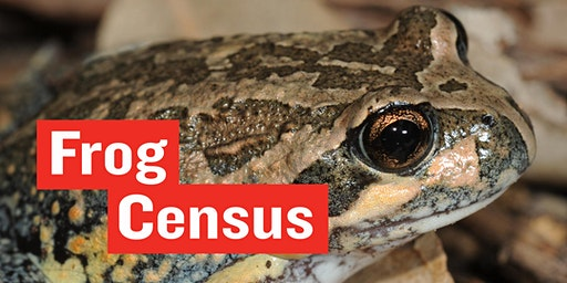 Frog Census  - National Science Week