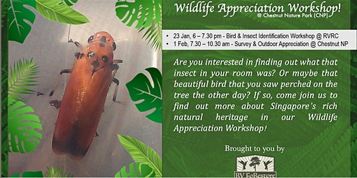Wildlife Appreciation Workshop (W.A.W)