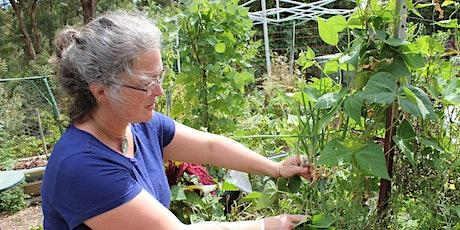 HomePatch - Lucinda's Permaculture Garden tickets