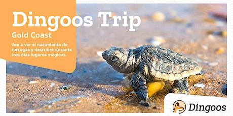 #DingoosTrip - Nacimiento de Tortugas  tickets