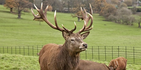 February Half Term Red Deer Feeding at Ashton Court Estate tickets