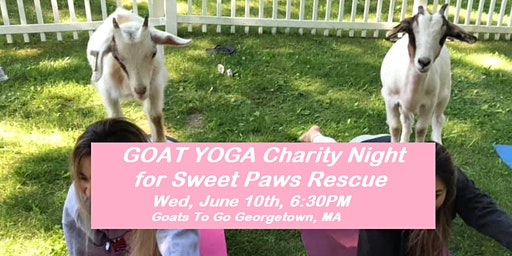 Charity GOAT YOGA (Sweet Paws Rescue)