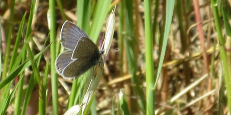 Butterfly walk with Liam O'Brien on Sign Hill tickets