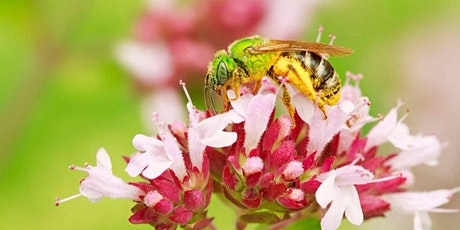 The Pollinator Victory Garden with Kim Eierman tickets