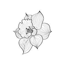 Narcisséa logo