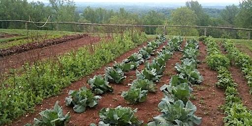 Spring Vegetable Gardening 101 Workshop