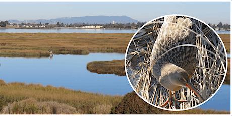 Birding Arrowhead Marsh at MLK, Jr. Regional Shoreline tickets