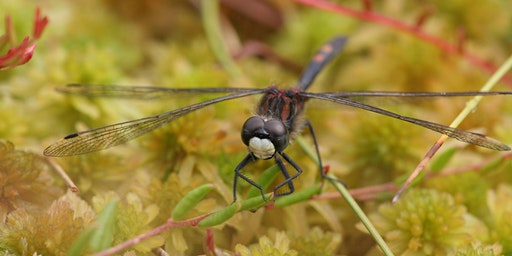 Chartley Moss Dragonfly Walk