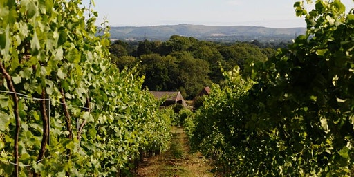 English Wine Masterclass and Tasting with Bolney Estate