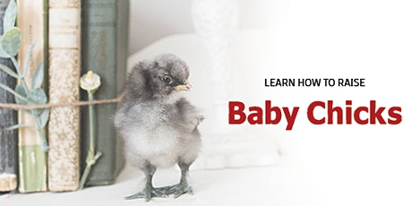 Learn how to raise Baby Chicks tickets