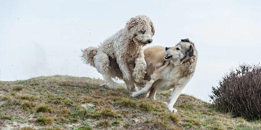 Canine Body Language Seminar HULL
