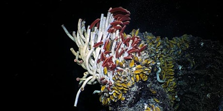Fire, Water, Life: Deep-Sea Volcanism with Dr Daniel J. Fornari tickets