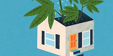 HOME  GROWING WORKSHOP