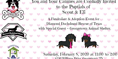 That's Amore! A Dachshund Wedding, Adoptions & FUNdraiser tickets