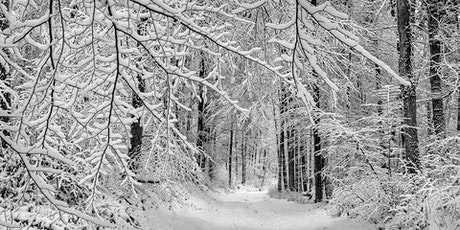 Winter Tree Identification with Dr. Cynthia Lane tickets