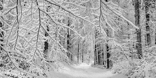Winter Tree Identification with Dr. Cynthia Lane