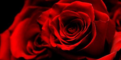 Valentine's Day Gala / Gala de Amor