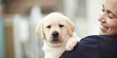 Puppy Carer Info Sessions: Kensington tickets
