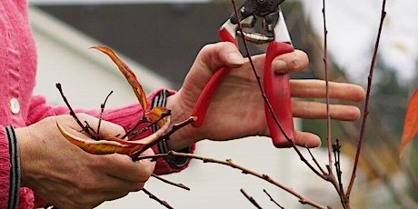 Advanced Pruning Workshop at Fruits of Diversity Orchard tickets