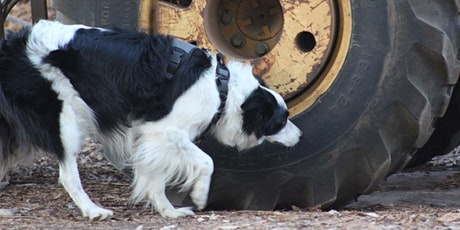 K9 Nose Work® Workshop, May 9th, with Jill Marie O'Brien tickets