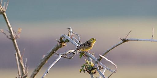 Big Garden Bird Watch at The Sill