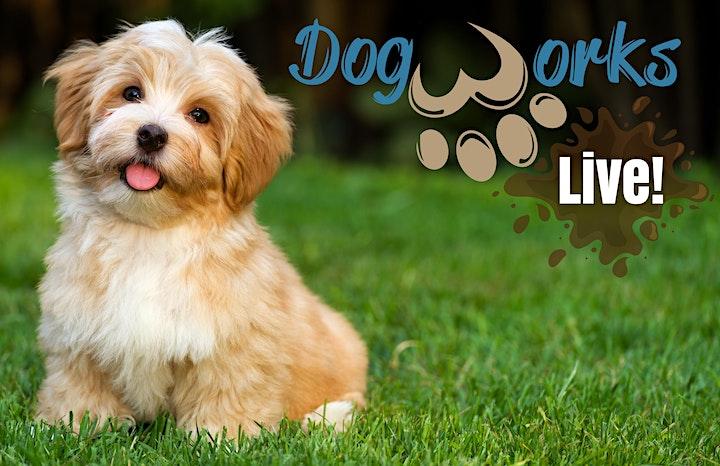Dogworks Live image
