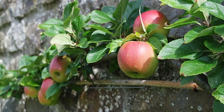 Fruit Trees: Trained Forms Course / Cwrs Coed Ffrwythau tickets