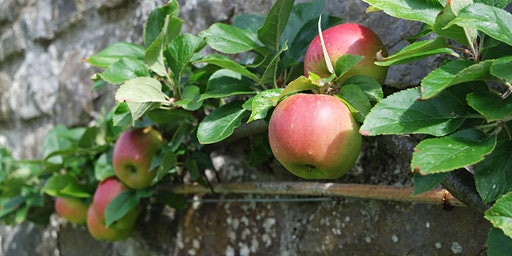 Fruit Trees: Trained Forms Course / Cwrs Coed Ffrwythau