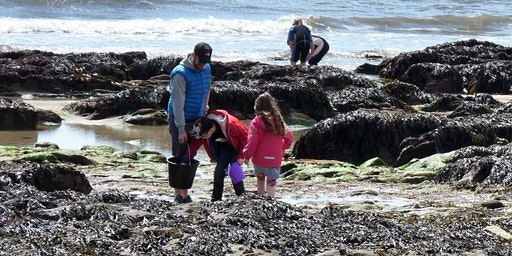 Free Rock Pooling Event - Film shoot with SSE Cornwall