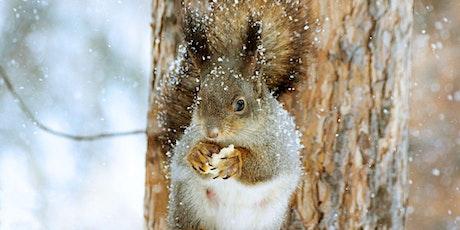 La vie sauvage dans nos forêts : observer et comprendre la nature en hiver  billets