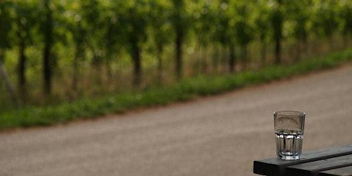 Vino di Cooperà - Degustazione vini Brda e Collio
