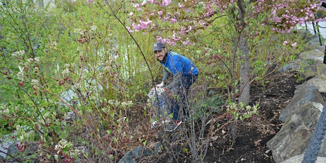Great Saw Mill River Cleanup 2020: Van der Donck Park, Yonkers tickets
