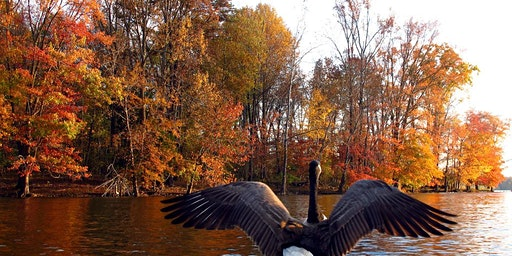 Waterfowl and Fall Foliage Public Paddle-Sultana Education Foundation