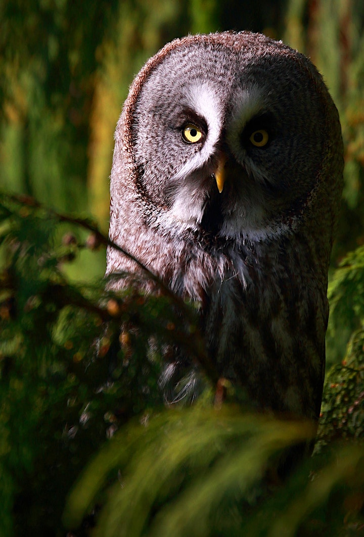 An Evening With Owls image