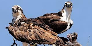 Osprey Public Paddle-Sultana Education Foundation
