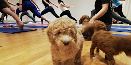 Puppy Flow Yoga tickets