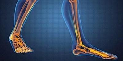 Kinesiology Lower Body - 4 Hrs Massage CE