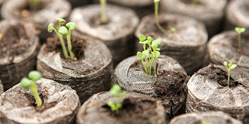 Growing Vegetables by Seed