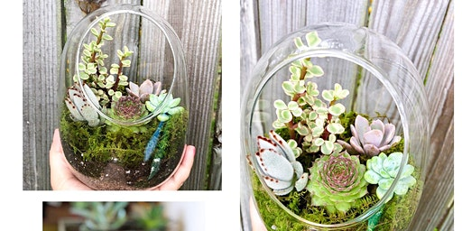 Keep Brevard Beautiful Succulent Terrarium Workshop