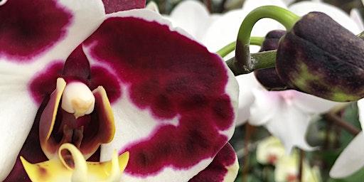 Galentine's Day | Orchid Kokedama Workshop