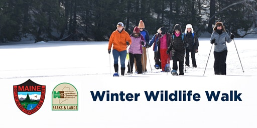 Winter Wildlife Walk