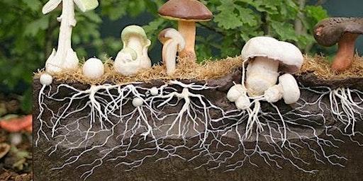 Mushroom hunting and Identification