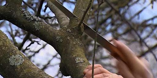Apple Tree Pruning Workshop at Bridge Farm